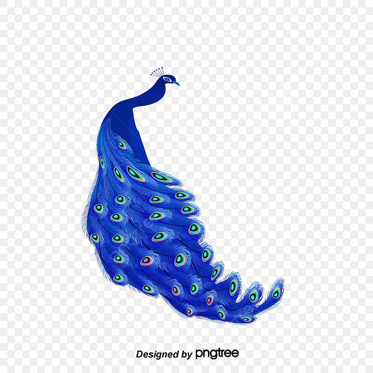 Vector Azul Pavao Animais Dos Desenhos Animados Ilustracao De