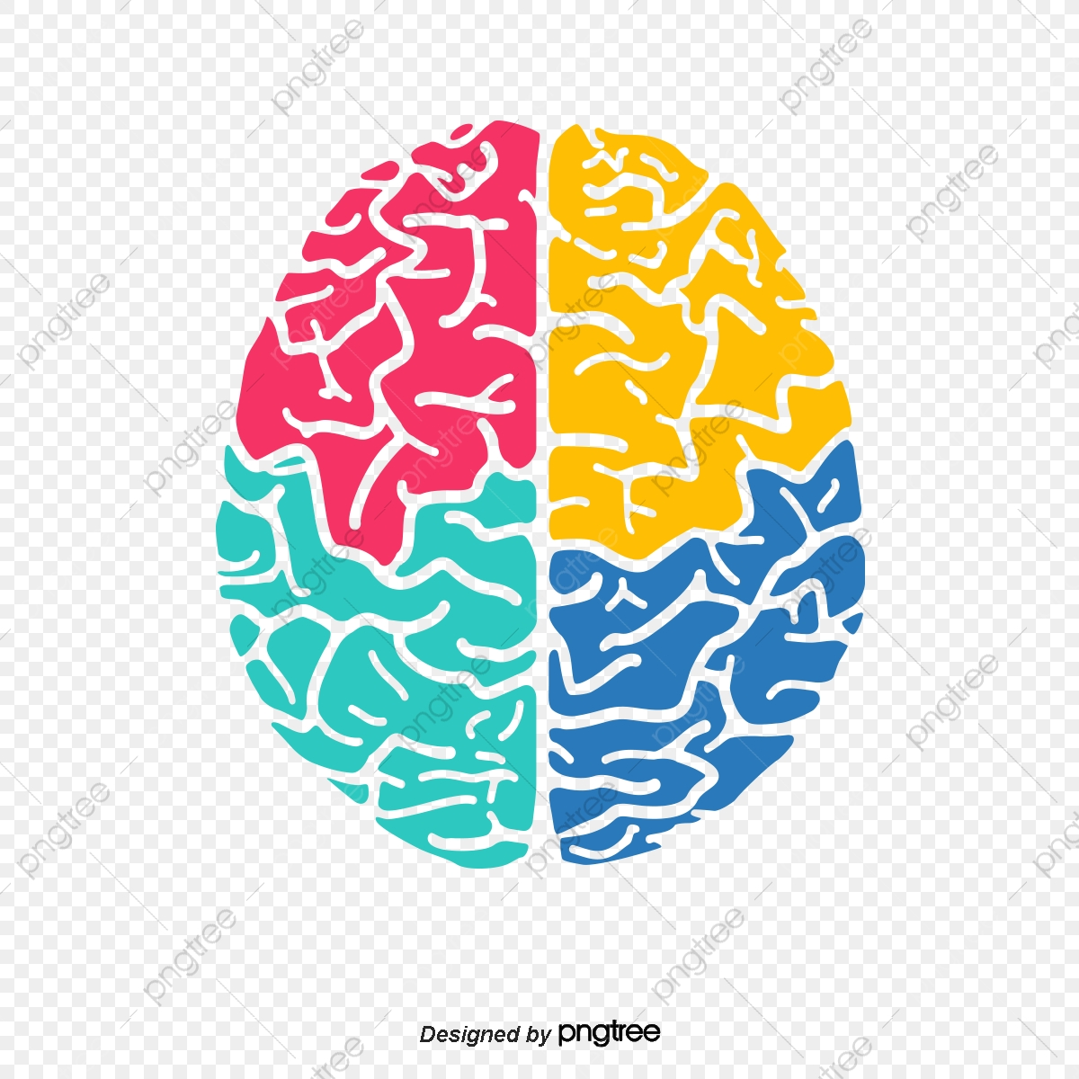 Vector Color Brain Color Vector Brain Vector Color