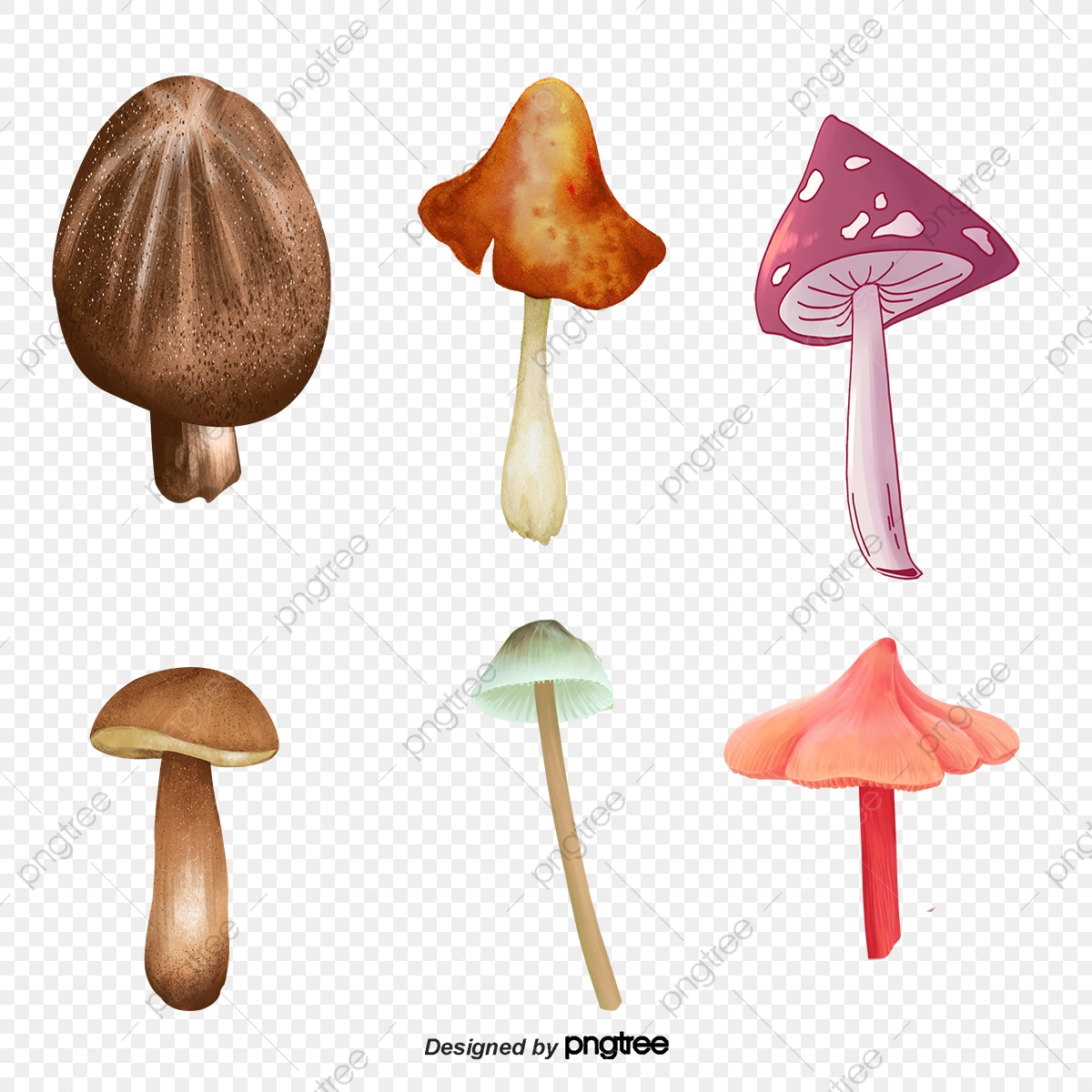Vector Color Mushrooms Color Vector Mushroom Cartoon Mushrooms