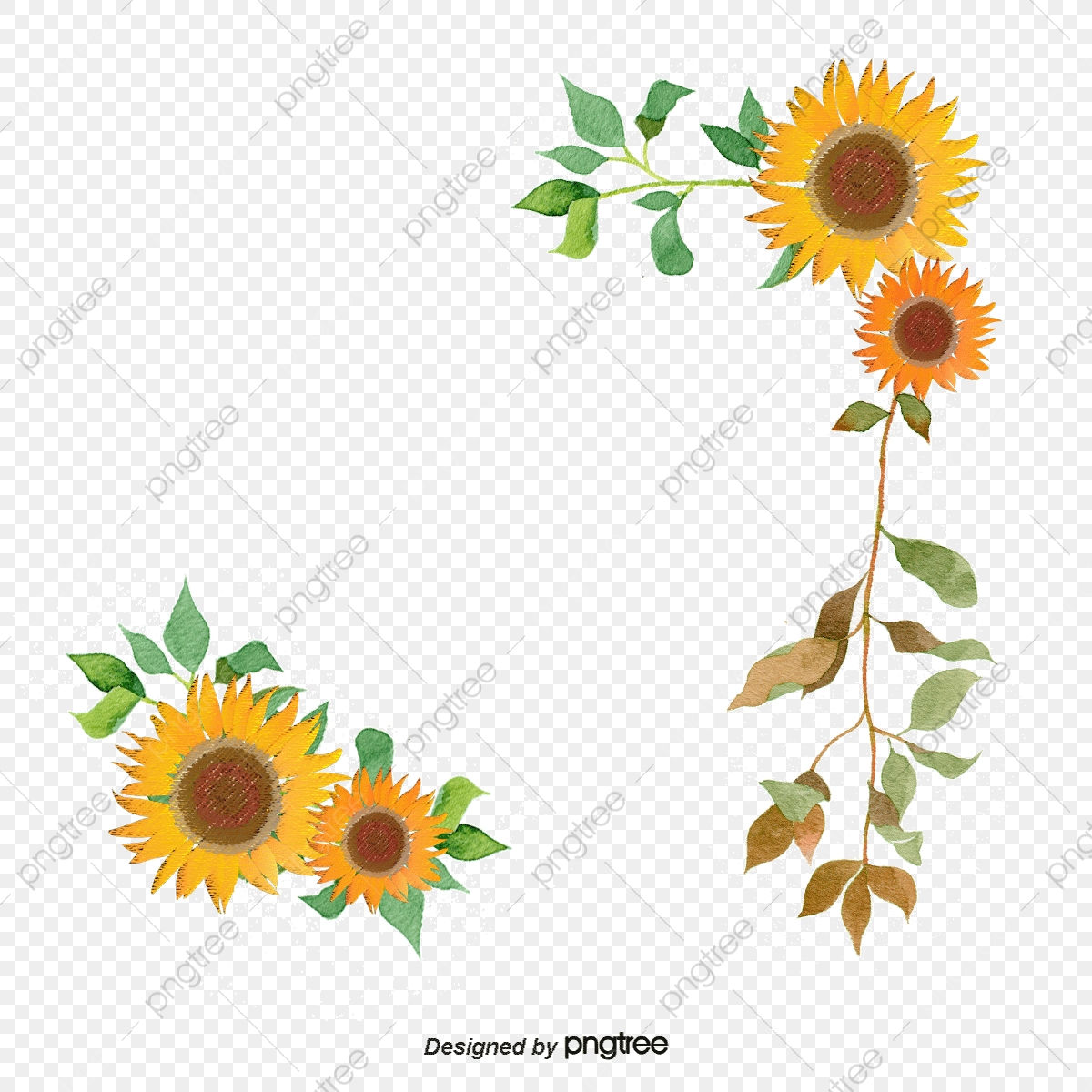 Sunflower Vector Png Free Sunflowers Sunflower Watercolor Watercolor Sunflowers Vector Images Pngtree