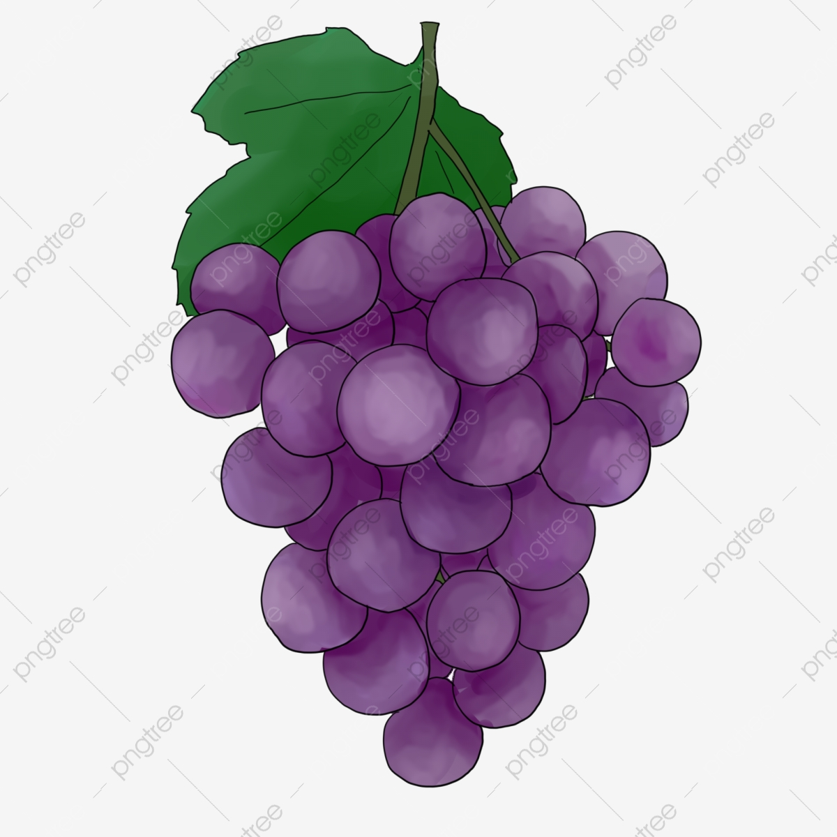 Black Grapes Black Grape Fruit Png Transparent Clipart