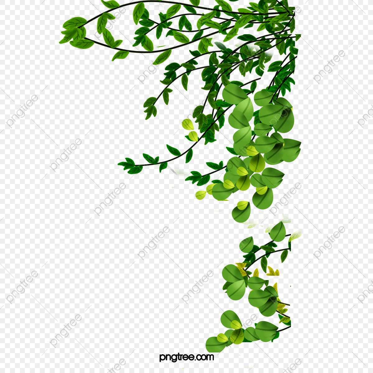Hand Drawn Cute Green Leaves Branch, Spring, Garden, Drawing PNG  Transparent Clipart Image and PSD File for Free Download