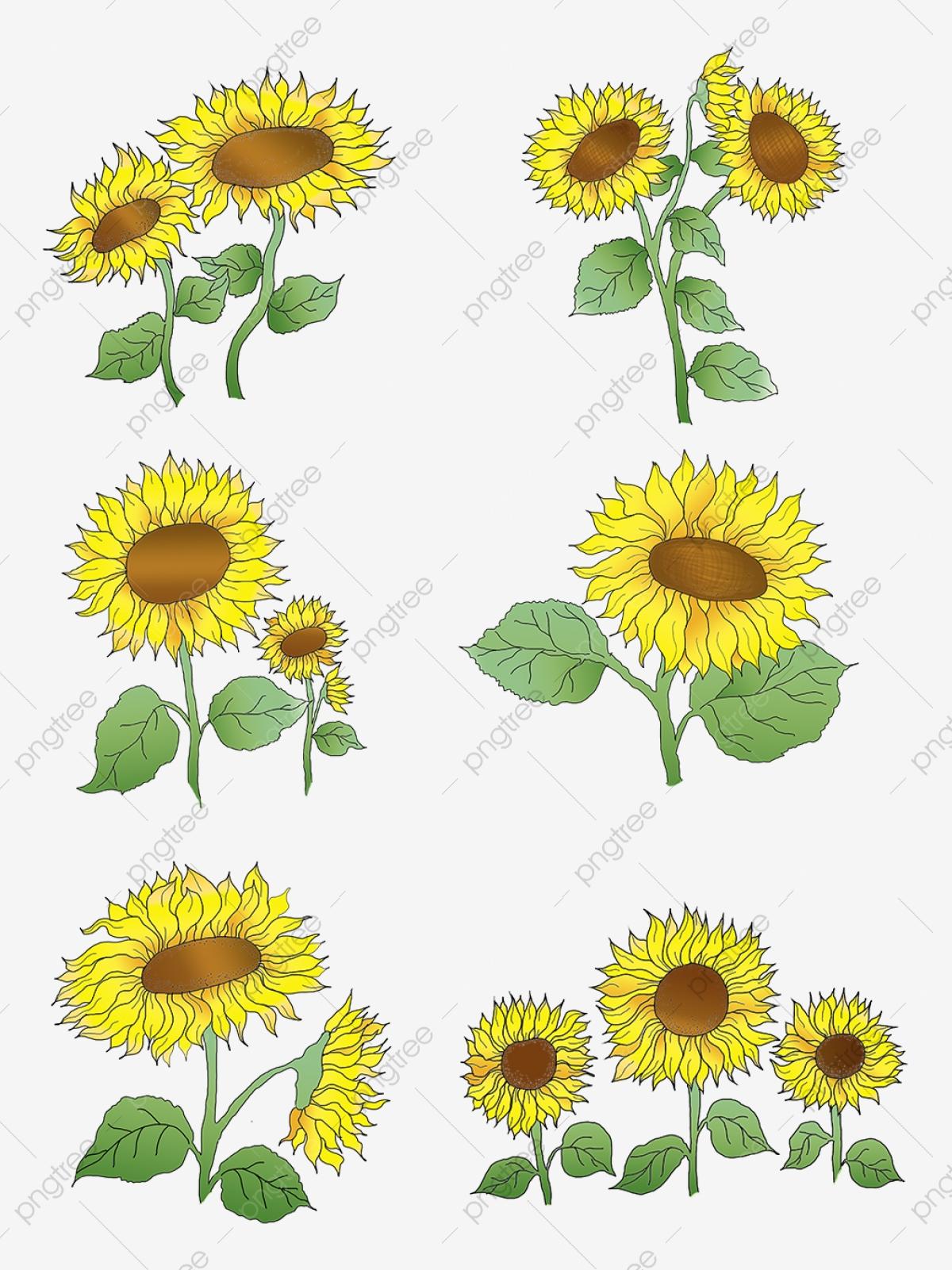 無料ダウンロードのためのイラストヒマワリ ひまわりのひまわり 花の植物