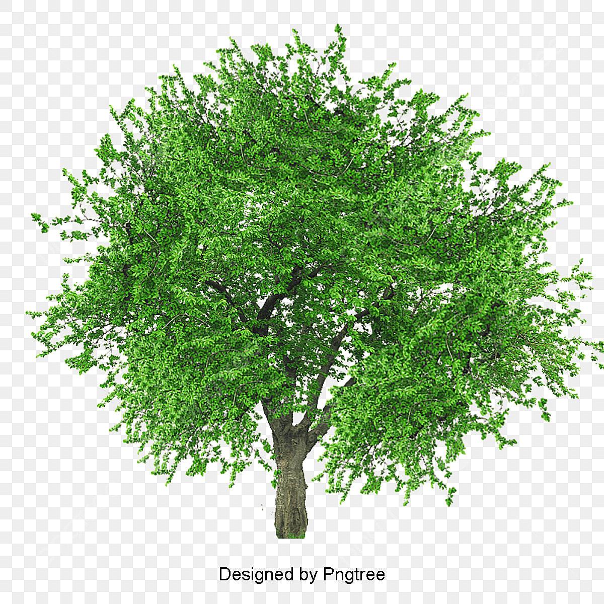 des arbres luxuriant les arbres les feuilles fichier png