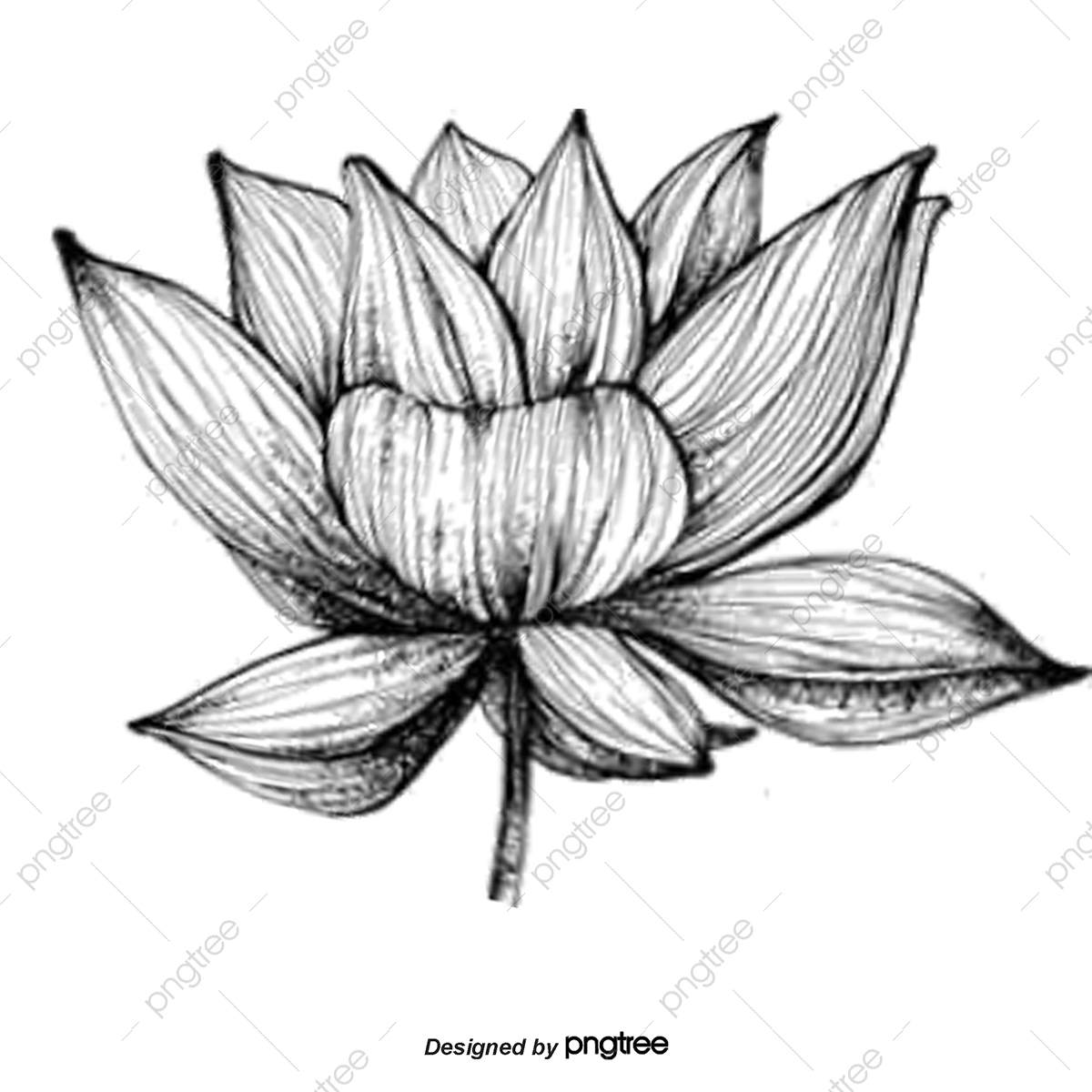 Black And White Flowers, Black, White, Flowers PNG