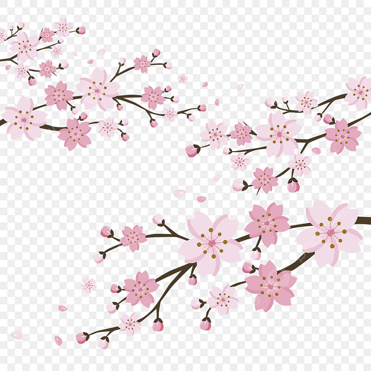 dessin de cerisier sakura de jeunes arbres les arbres d