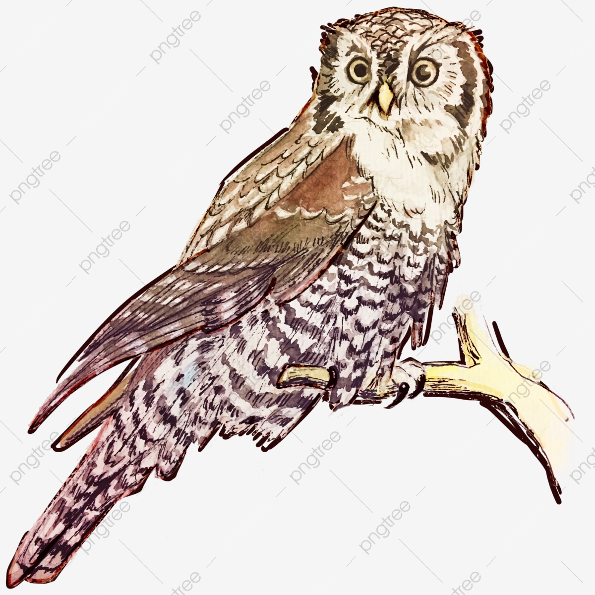 Cartoon Tree Owl Tree Clipart Owl Clipart Cartoon Clipart Png Transparent Image And Clipart For Free Download Cartoon tree owls illustrations & vectors. https pngtree com freepng cartoon tree owl 3108754 html