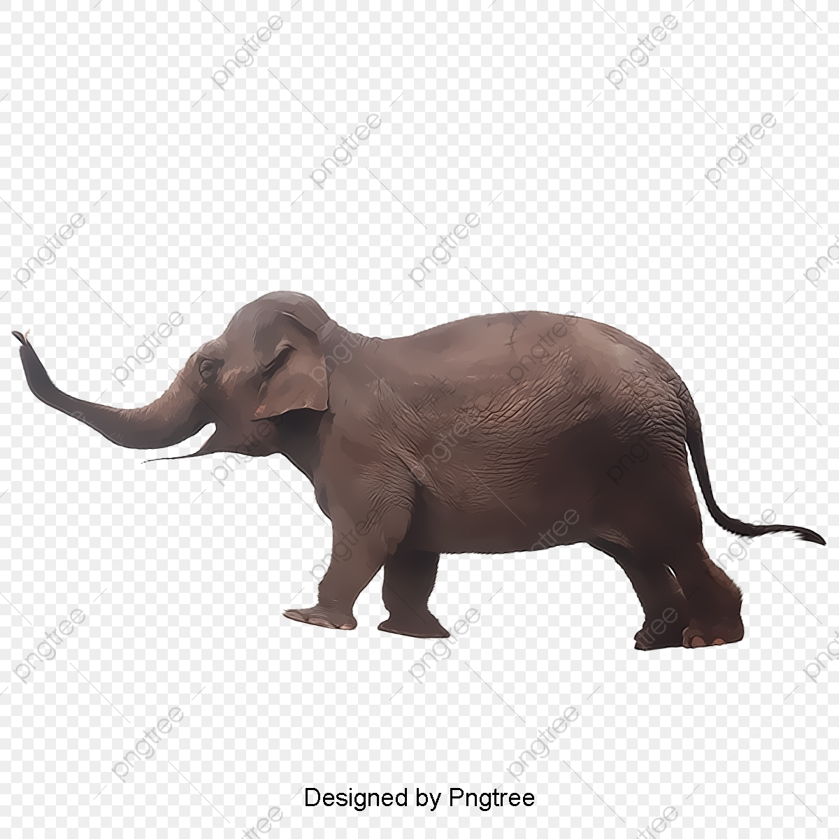 Elephant Png Transparent Clipart Image And Psd File For Free Download You can download 1279*1413 of elephant background now. https pngtree com freepng elephant 2225988 html