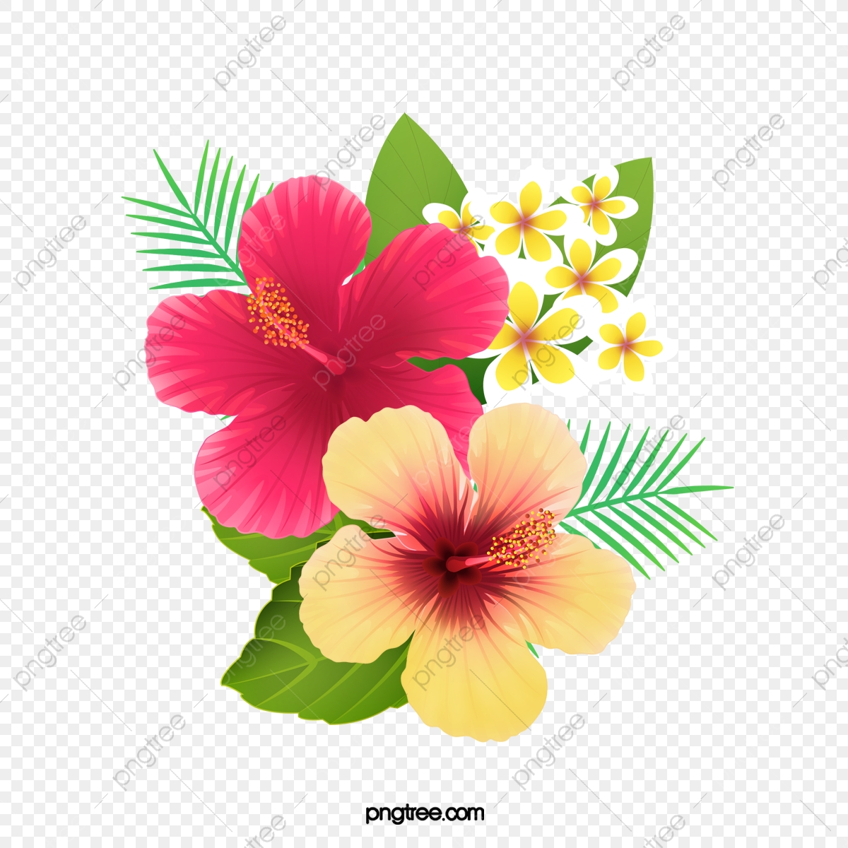 Fresh Hibiscus Flowers Creative Cartoon Png Transparent Image And