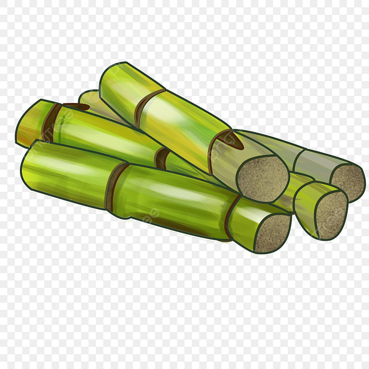 vert doux de la canne  u00e0 sucre vert doux la canne  u00e0 sucre