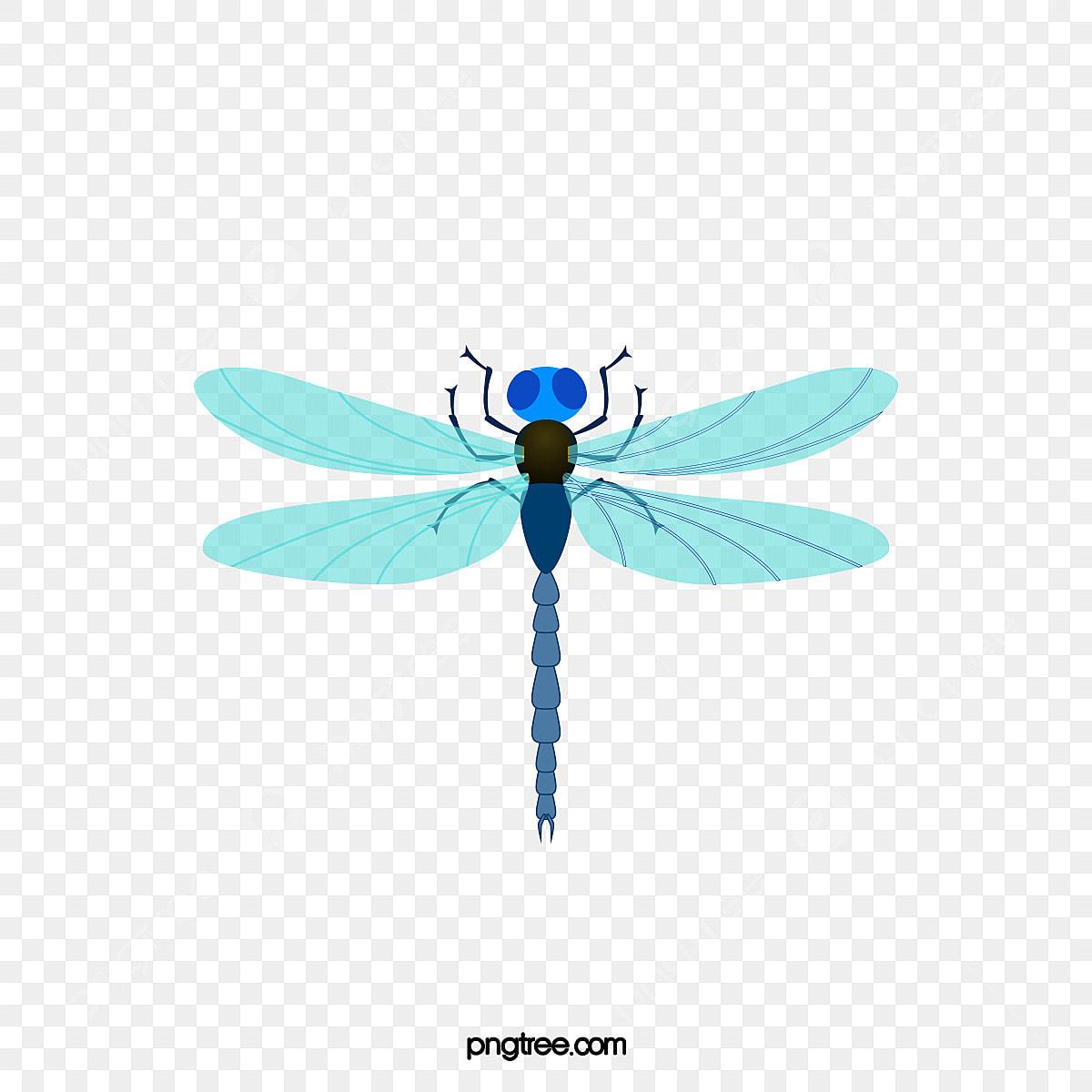 bleu libellule en mati u00e8re de vecteur les insectes les