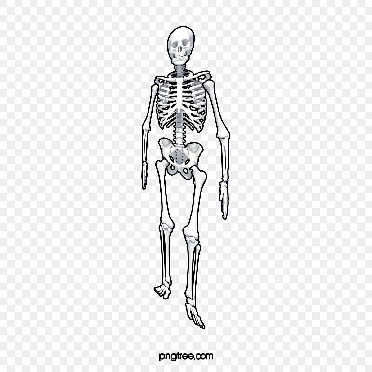 Vector Personajes Dibujado A Mano Esqueleto Esqueleto Esqueleto