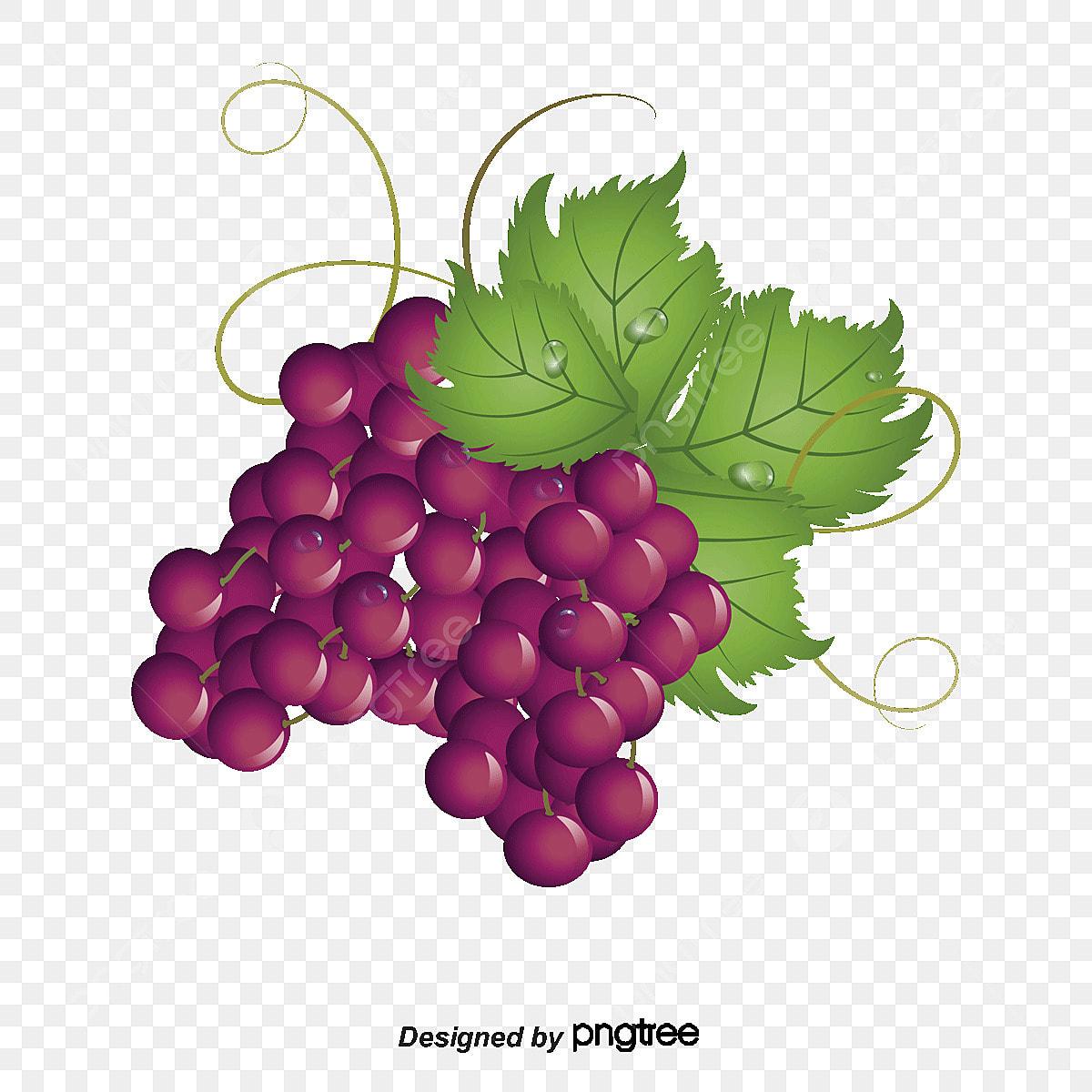 71+ Gambar Anggur Dan Mangga Terlihat Keren