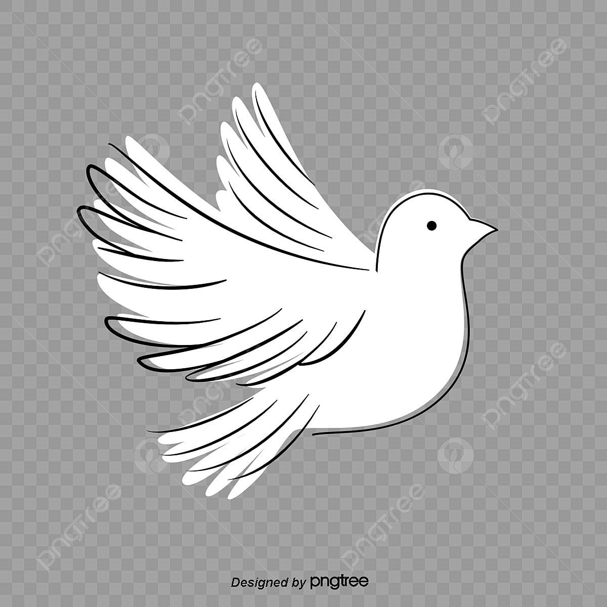 حمامة السلام ناقلات فرع الحمام الزاجل حمامة السلام البيضاء Png وملف Psd للتحميل مجانا