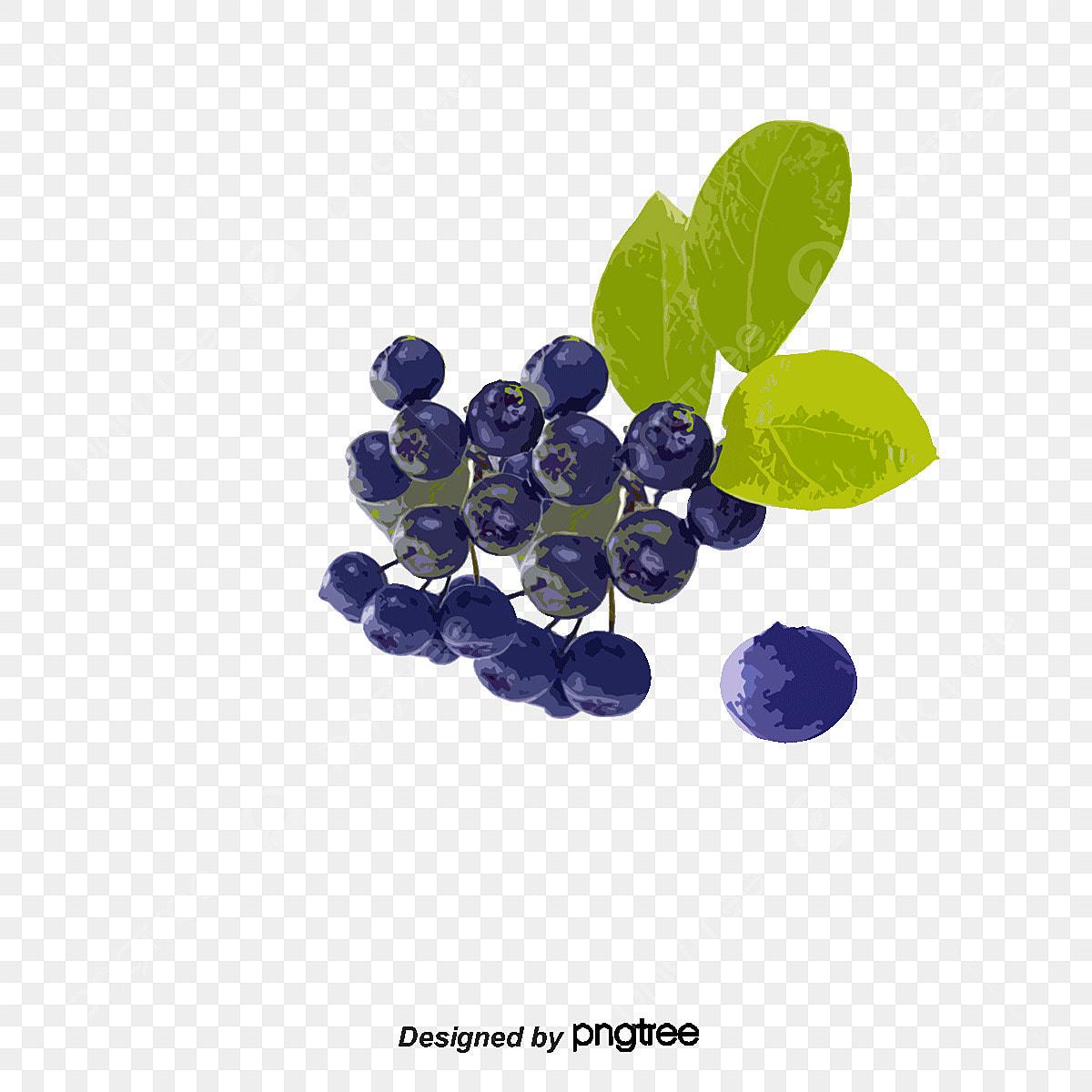 Desenhos De Frutas Vector Png Blueberry Torta De Frutas Png E