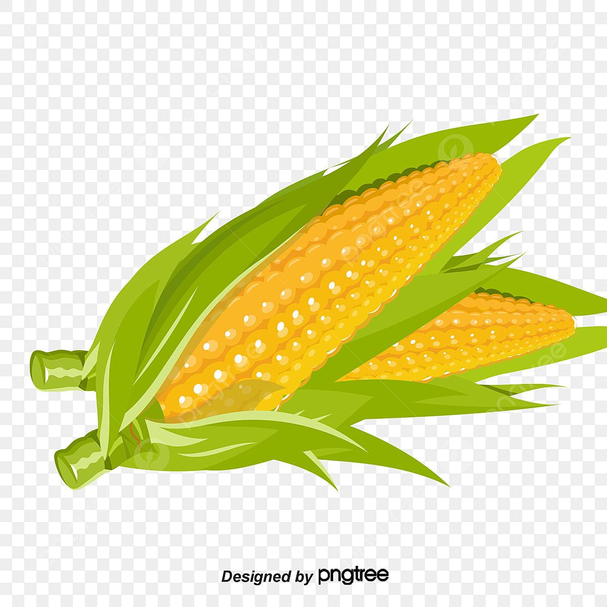 Maize Clip Art - Transparent Background Corn Clipart, HD Png Download -  kindpng