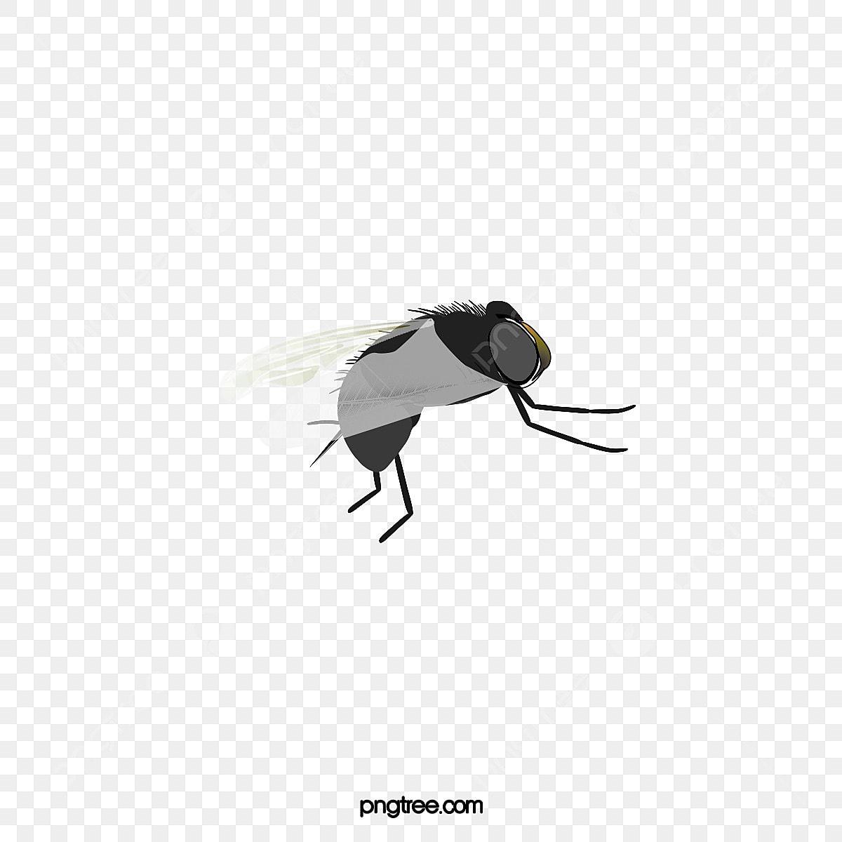 Lalat Jenis Lalat Serangga Haiwan Fail PNG Dan PSD Untuk