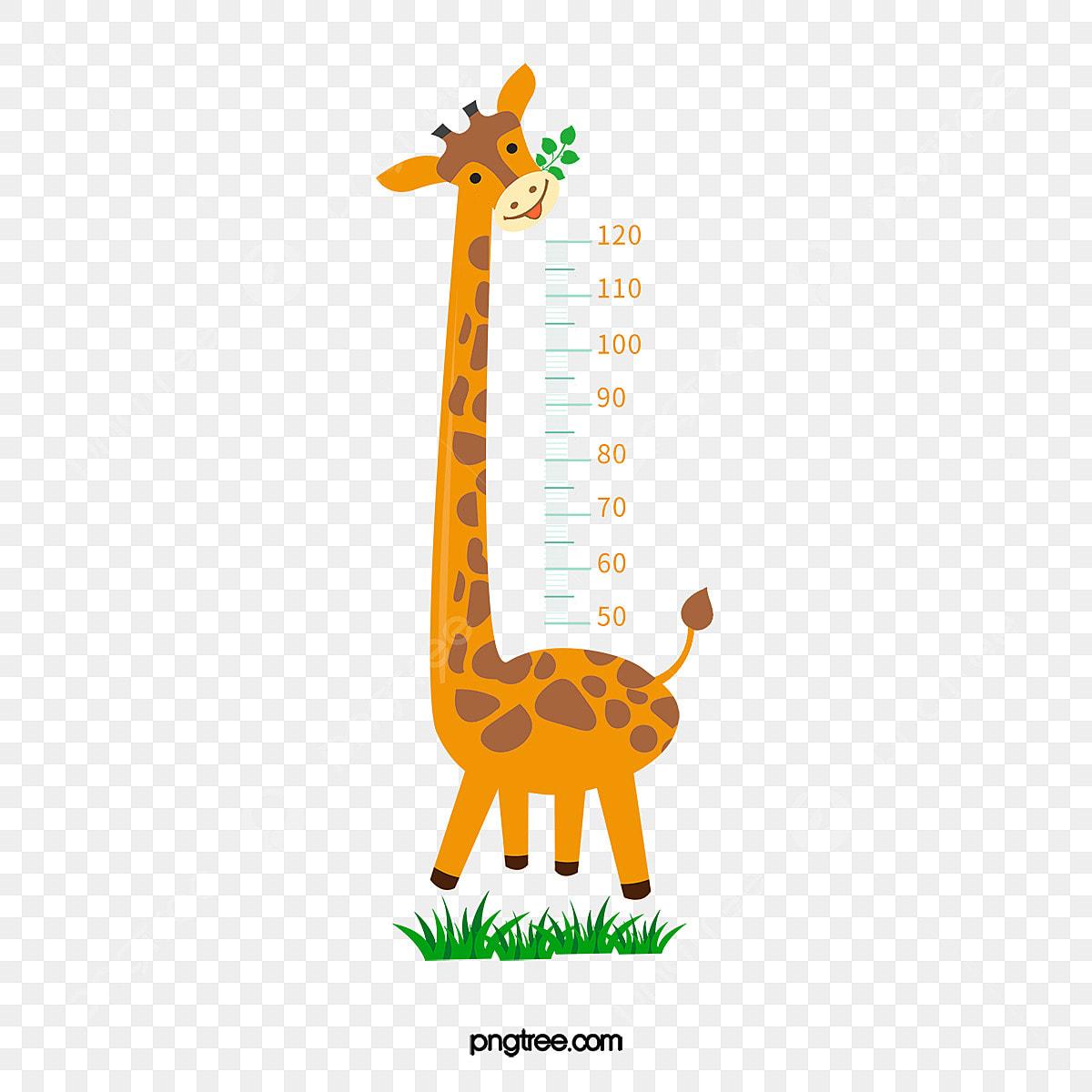 La Hauteur De La Girafe Dessin Regle Regle Fichier Png Et Psd Pour Le Telechargement Libre