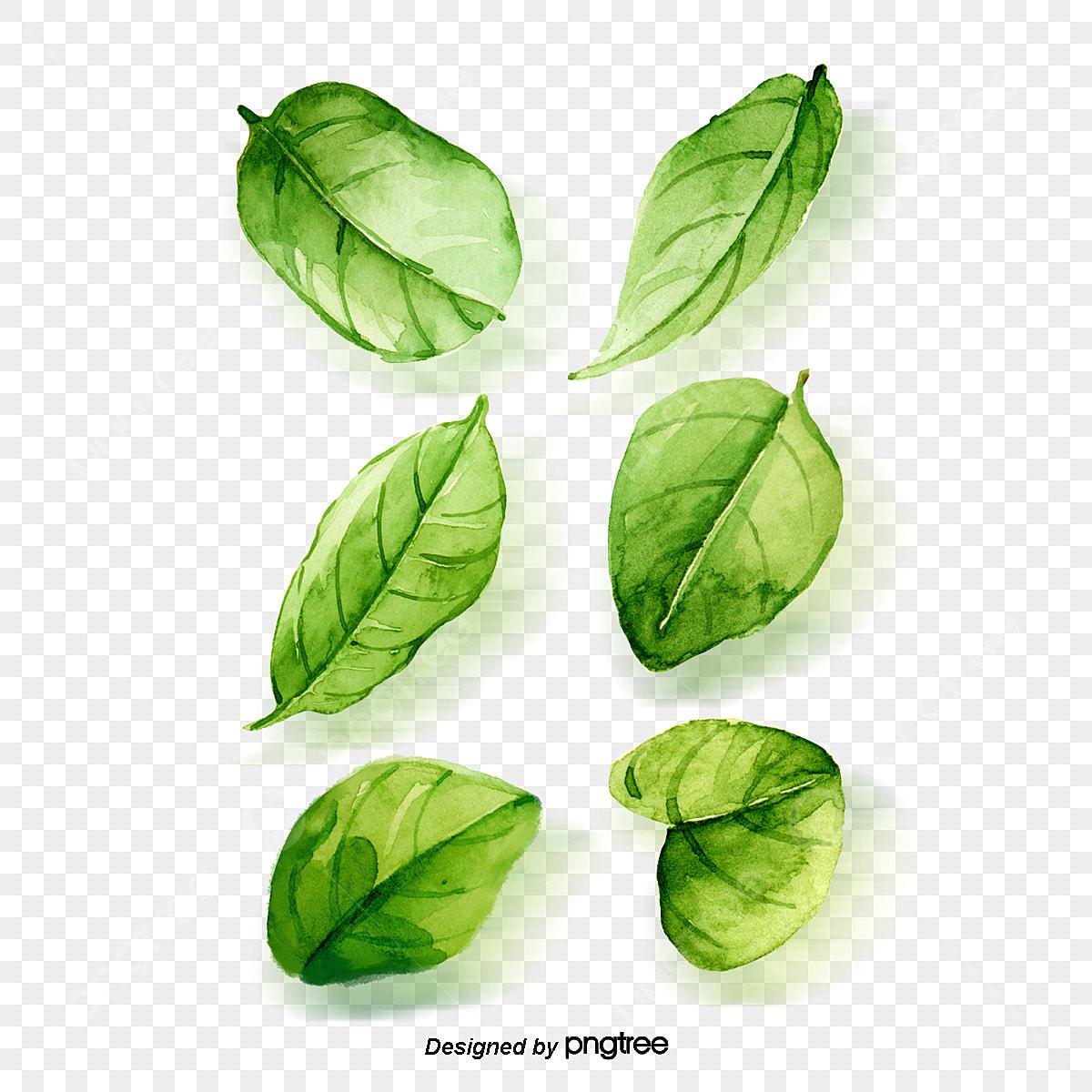 aquarelle de feuilles aquarelle feuilles vert image png