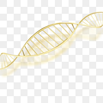 golden yellow gradient dna chains, Dna, Gloss, Makeup PNG and PSD