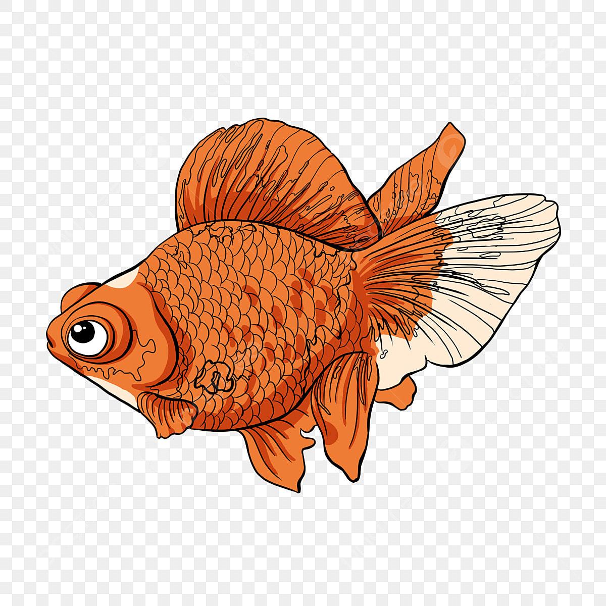 maintien de la petite sir u00e8ne de poisson sir u00e8ne poisson