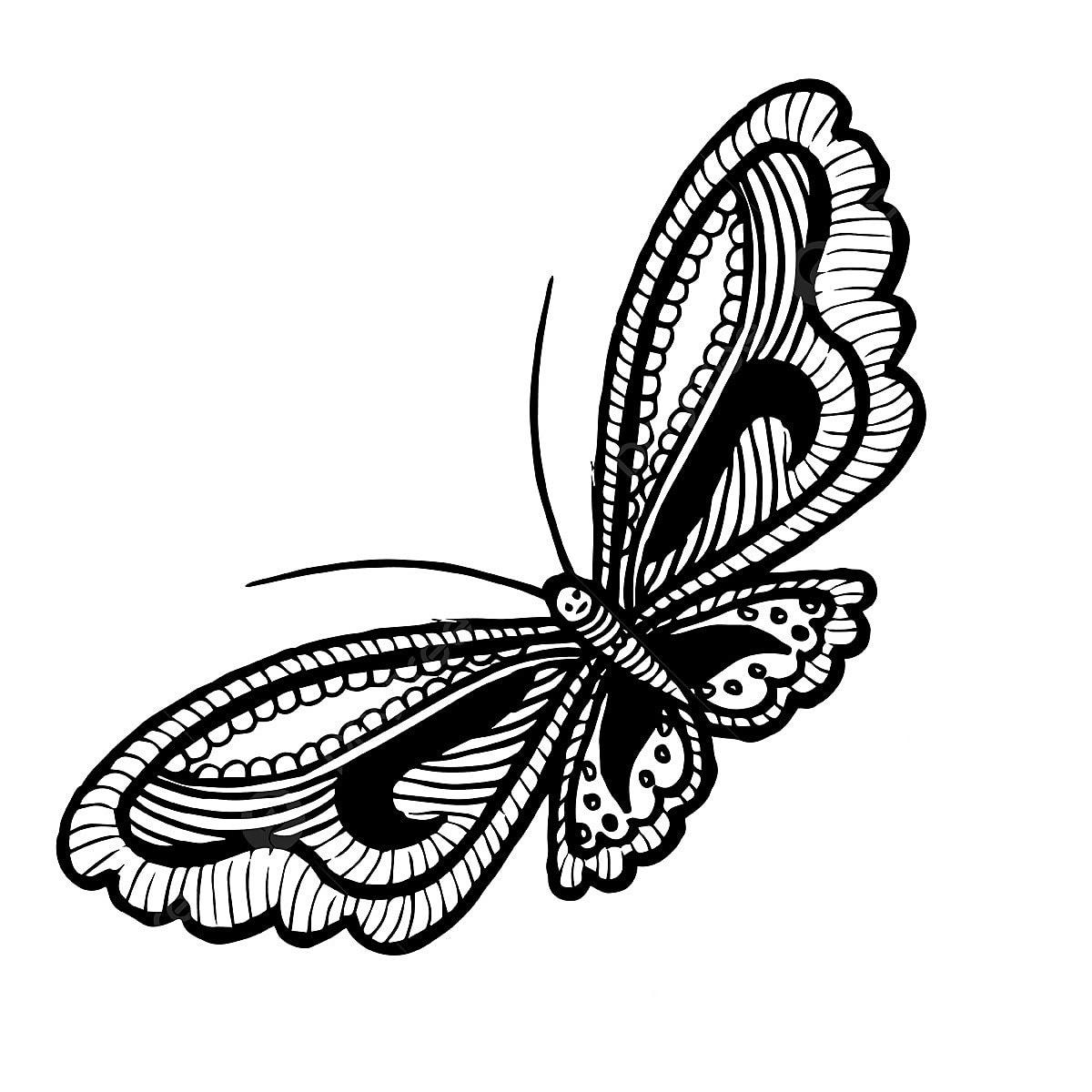 جميلة مرسومة باليد أبيض وأسود فراشة من ناحية رسم أسود Png والمتجهات للتحميل مجانا