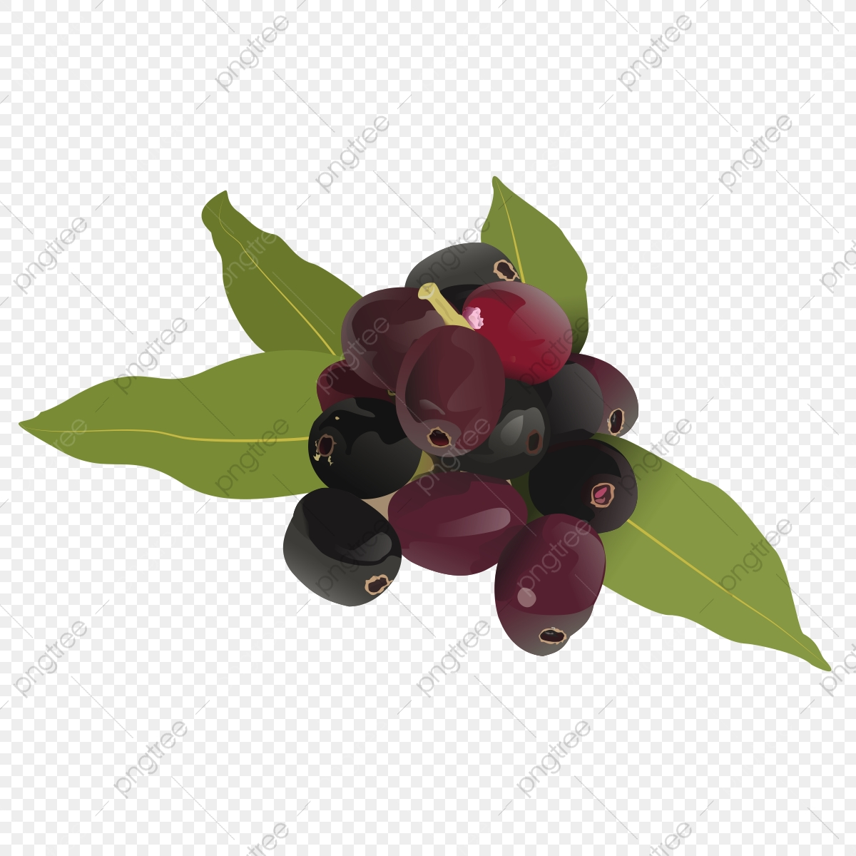 Fruit Drawing Clipart Jamun, Fruit Logo, Set Clipart ...