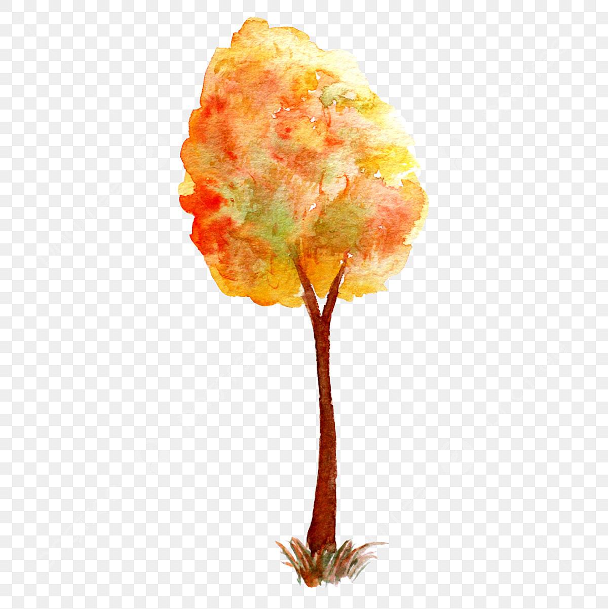 Autumn Maple Merah Maple Pokok Maple Hongfeng Hari Musim