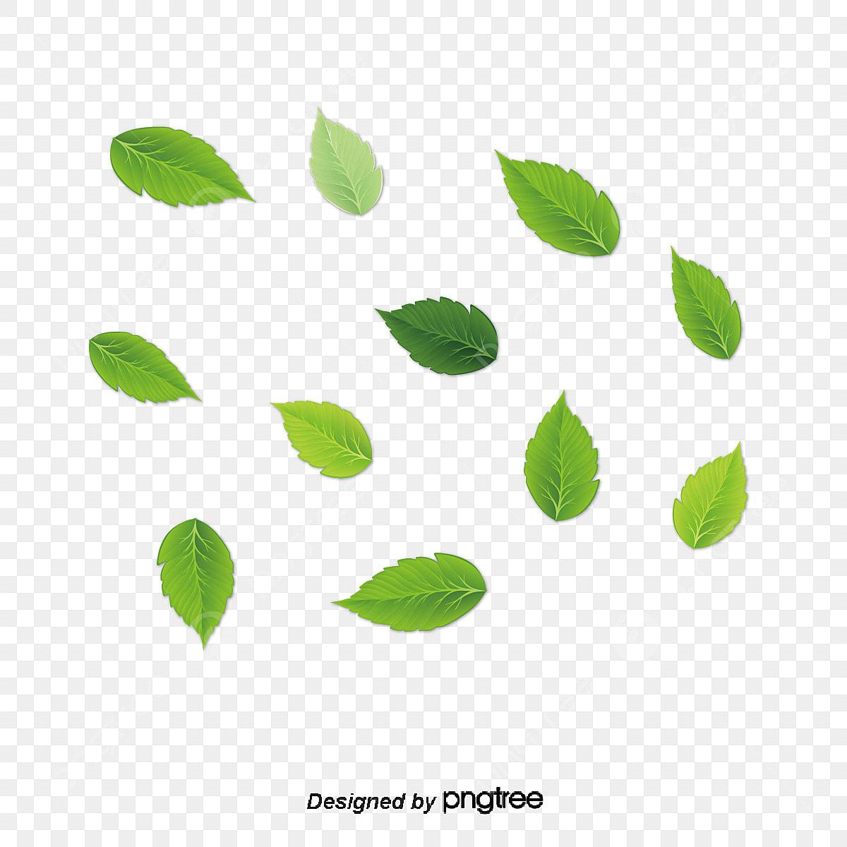 Leaves Clipart Green Tea Leaf, Leaves Green Tea Leaf - Green Leaf Png  Vector Transparent Png (#4998359) - PinClipart
