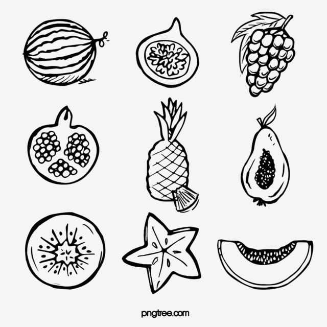 pngtree black and white fruit sketch elements png image 1495937