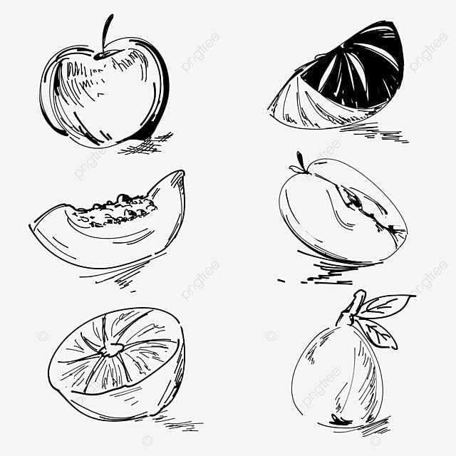 pngtree black and white line sketch fruit elements png image 1495925