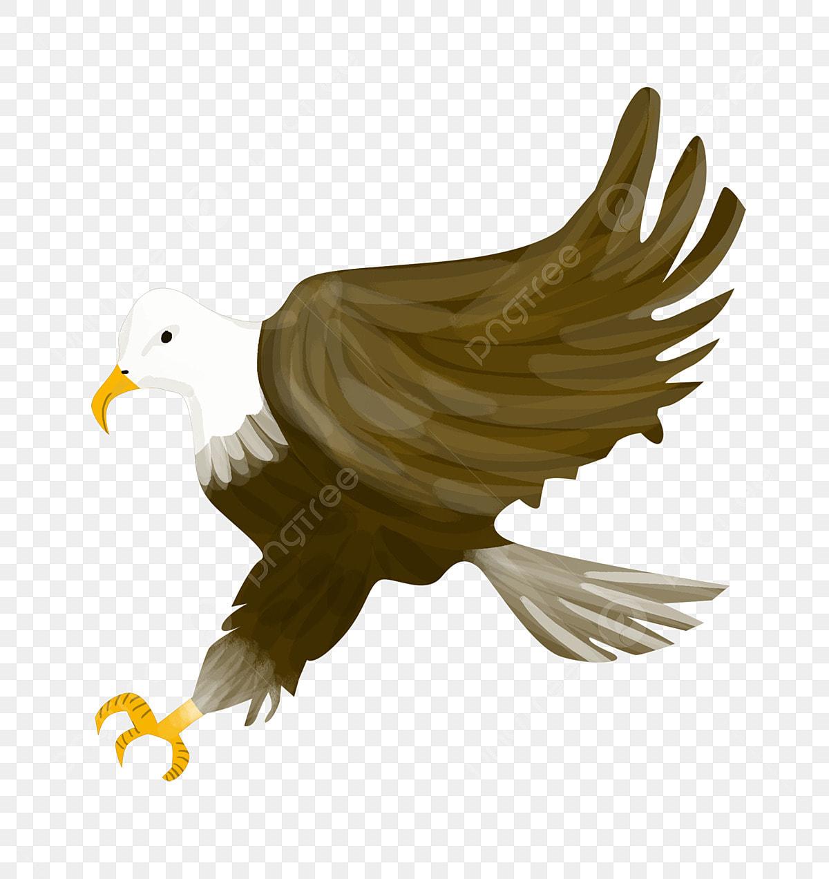 Cute Eagle Landing Eagle Fast Going Eagle Cartoon Animals