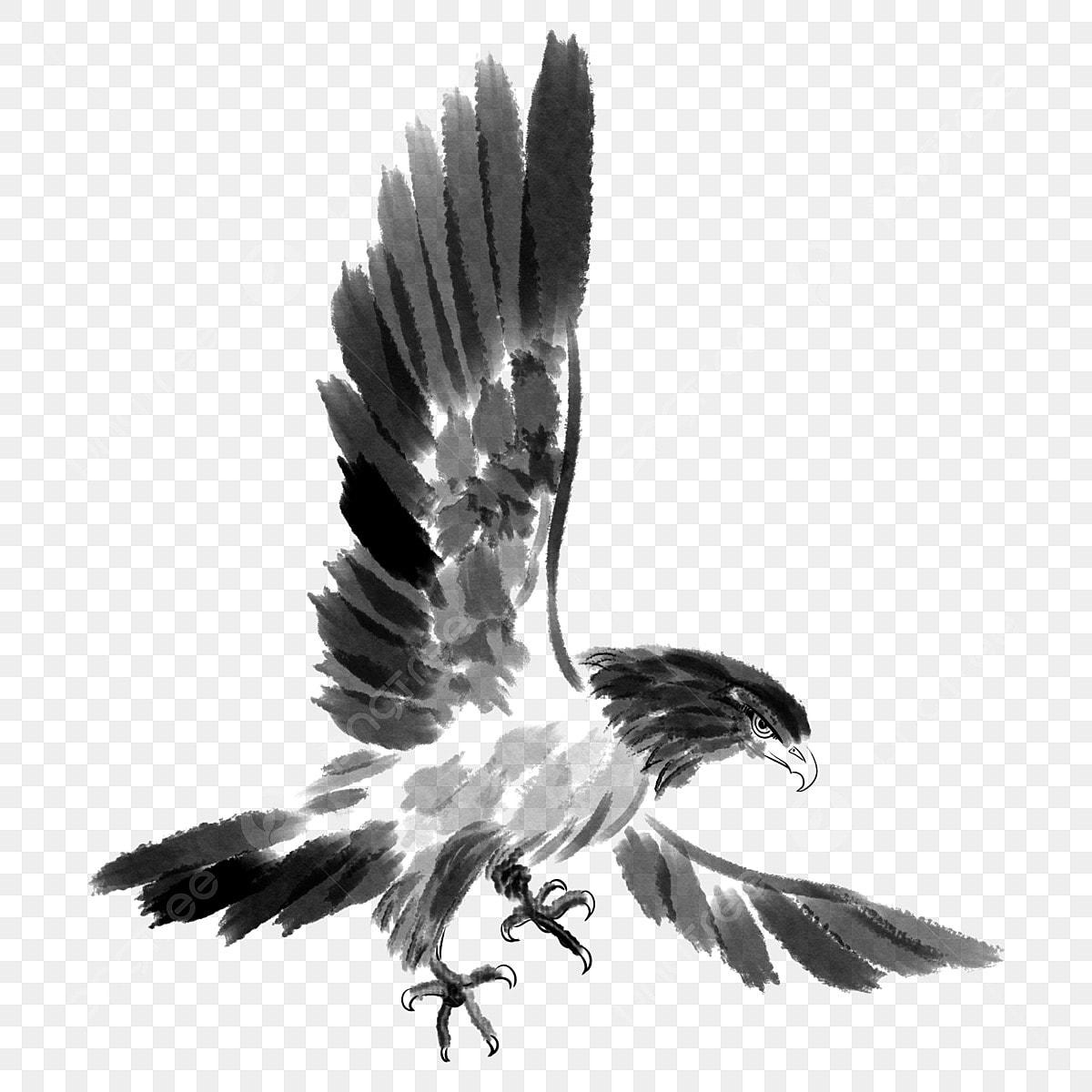 Aigle Volant Les Ailes Noir Et Blanc Illustration De Dessin