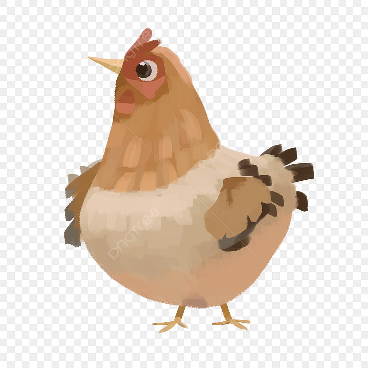 손으로 그린 닭 애완 동물 닭 갈색 닭 뚱뚱한 닭 깃털