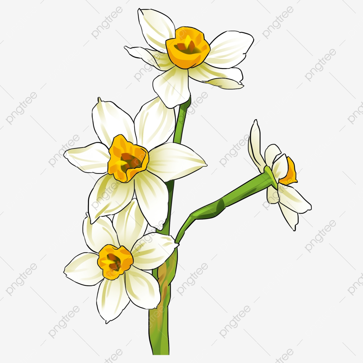 Hand Painted Botanical Flowers Daffodil Flowering Branch Holiday Decoration Flower Cartoon Daffodil Ornamental Plant Winter Indoor Flower Png Transparent Clipart Image And Psd File For Free Download