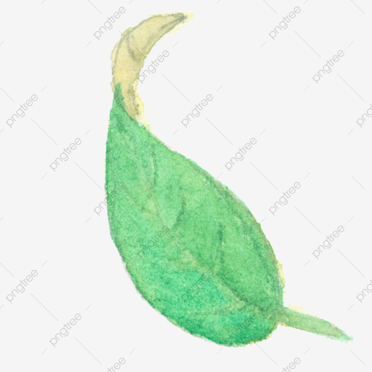 Hand Painted Watercolor Plant Green Leaf Plant Leaves, Watercolor ...
