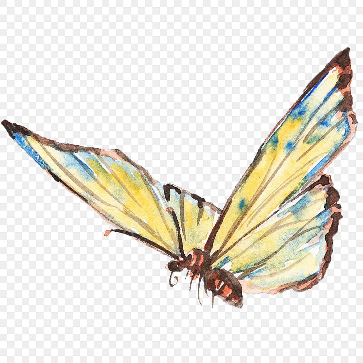 Mariposa De Tinta Acuarela Mariposa De Color Insecto Acuarela