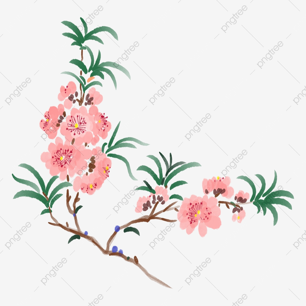Spring Flowers Blooming Cherry Blossoms Beautiful Cherry