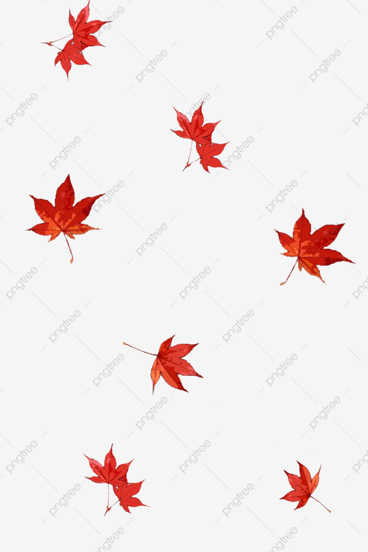 Floating Png Aesthetic Png Decoration Maple Leaf Red Despair Poster Production Png Transparent Clipart Image And Psd File For Free Download