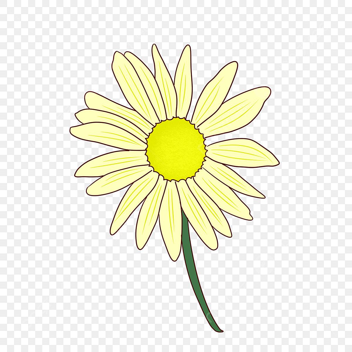 Dilukis Tangan Kartun Krisan Festival Kesembilan Ganda Bunga Musim Gugur Awal Musim Gugur Png Transparan Gambar Clipart Dan File Psd Untuk Unduh Gratis