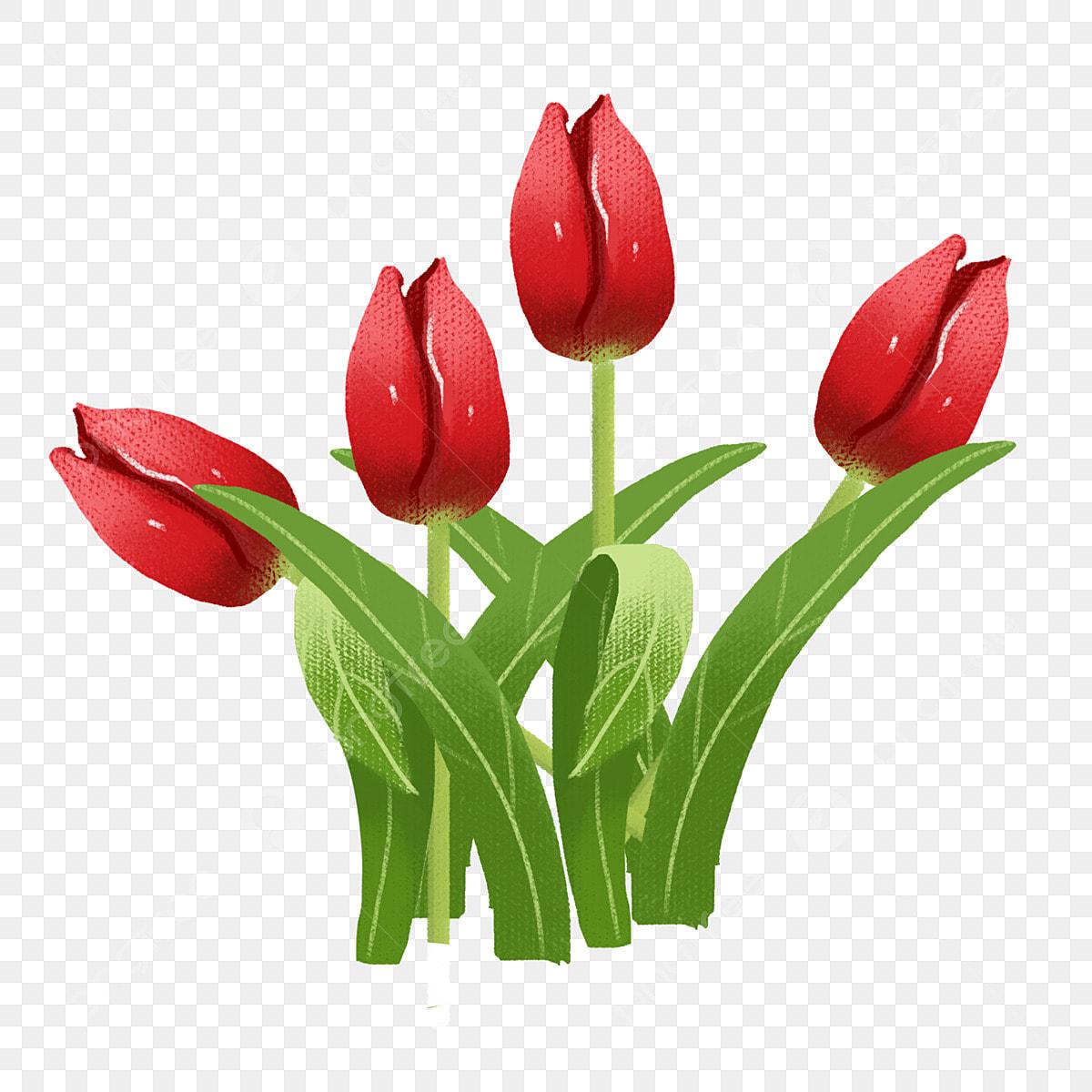 Tangan Ditarik Warna Bunga Tulip Kartun Tangan Tulip Ilustrasi
