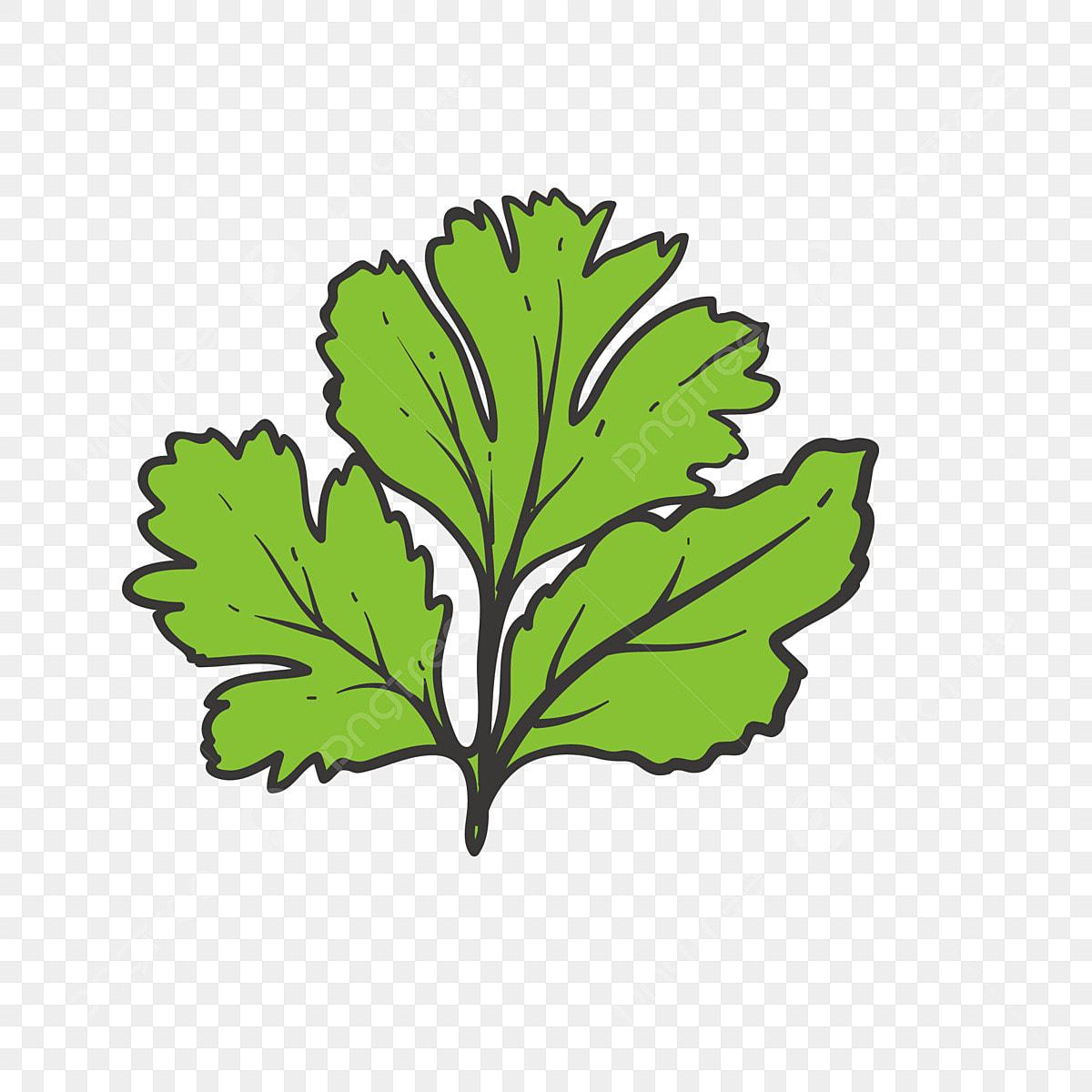 Plante Dessiné à La Main Cg Tableau De Bord Vert