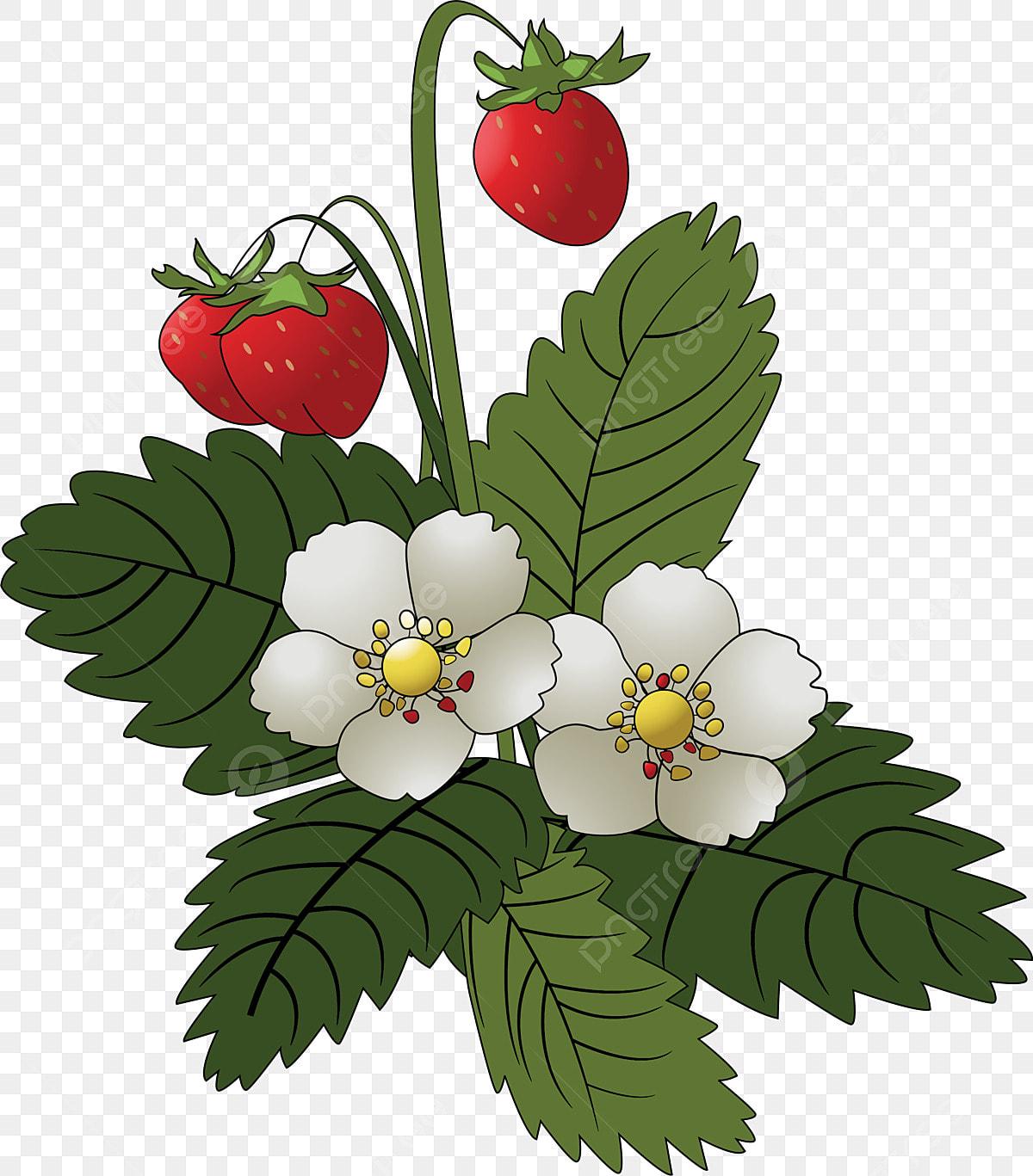 イチゴの葉イチゴの葉の花 黒ストローク いちごの束 熟したイチゴ画像素材の無料ダウンロードのためのpngとベクトル