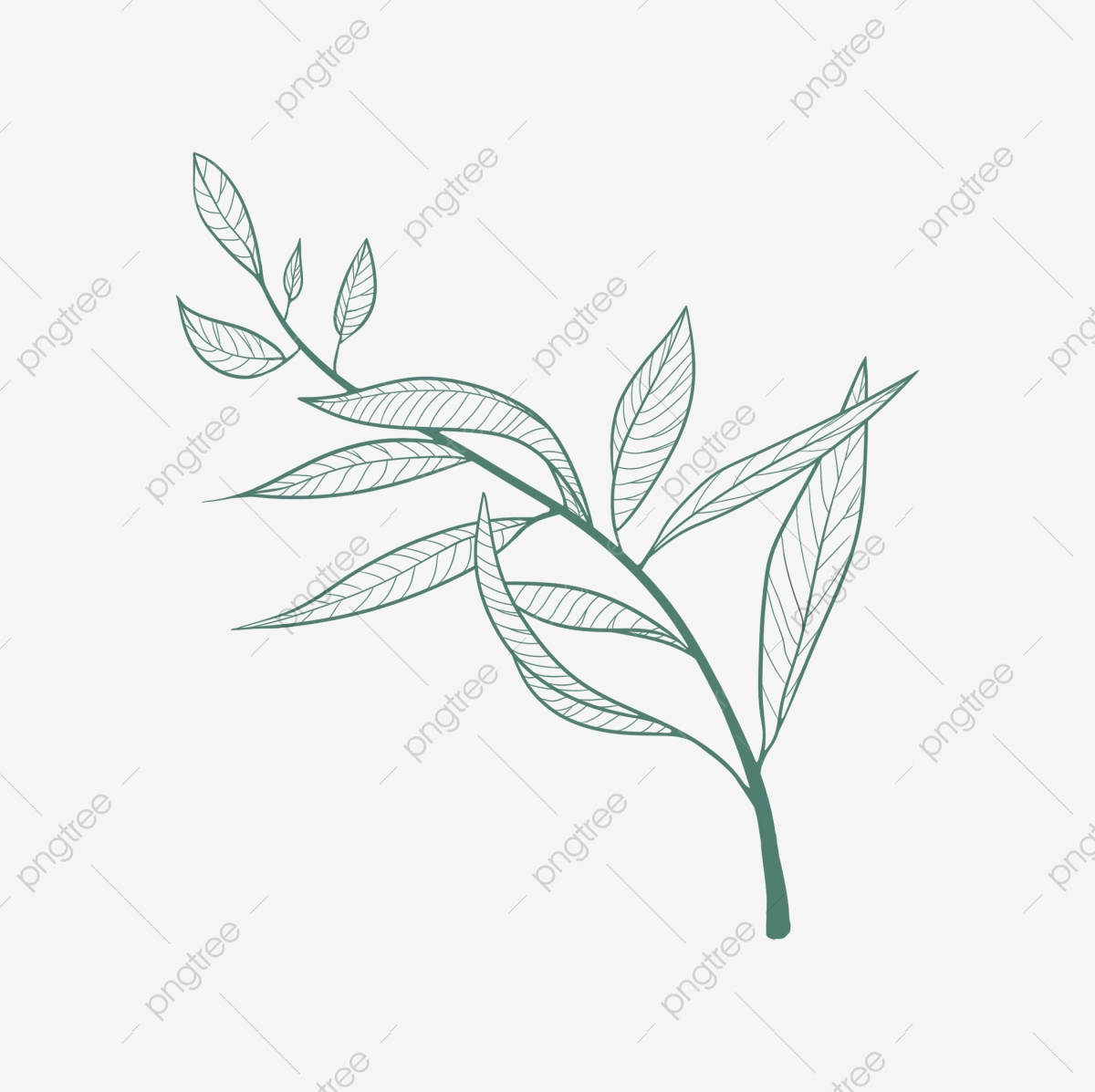 Summer Plant Willow Hand Painted Transparent Background