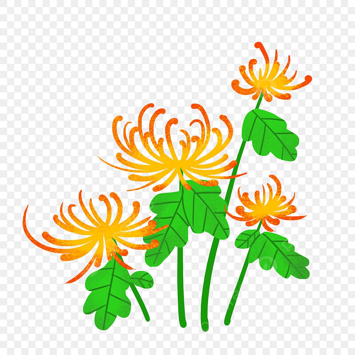 Dessin Animé Main Dessinée Chrysanthème Fleur Bouquet
