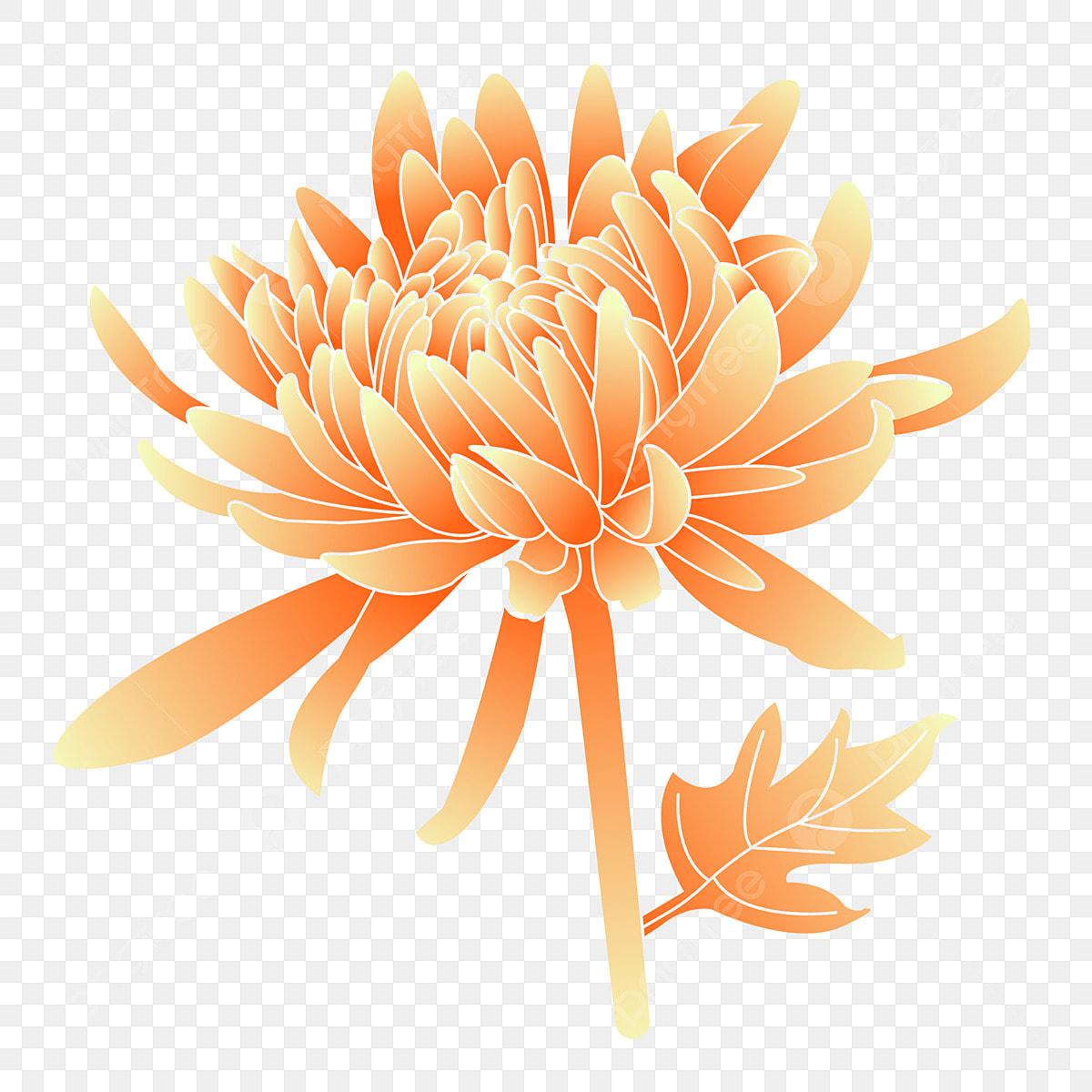 Hand Gezeichnete Steigungswindchrysanthemenflorenelemente