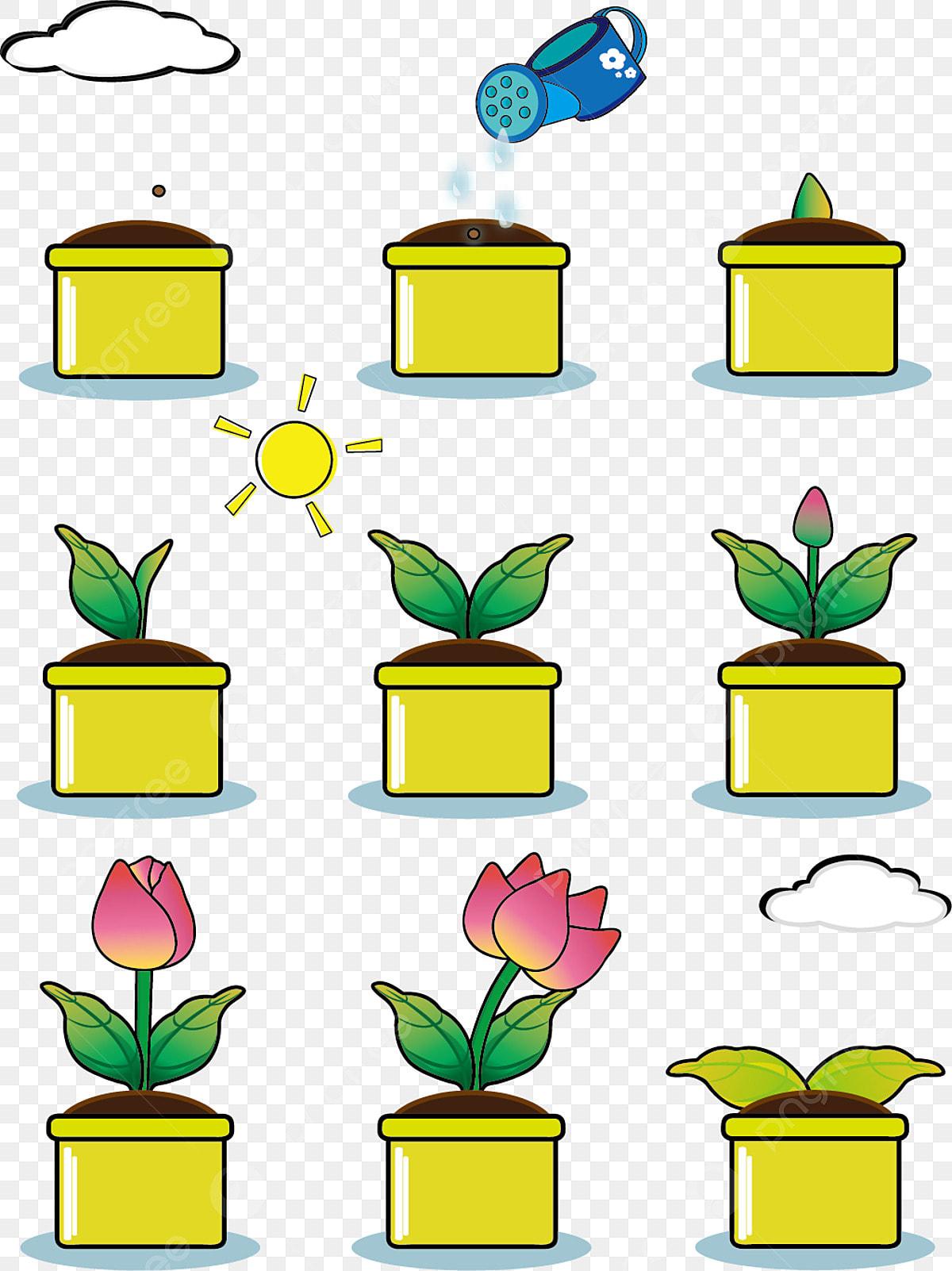 Processus De Croissance Des Plantes Dessinées à La Main Vent