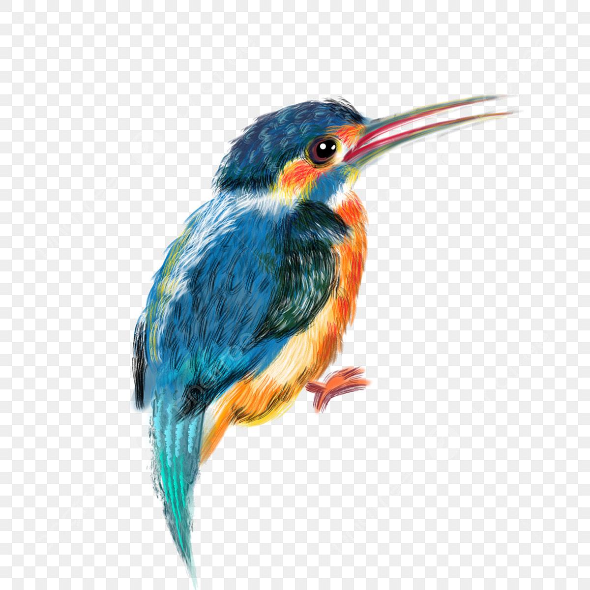 Plumas De Colores Hermosas Aves Dibujos Animados Elemento