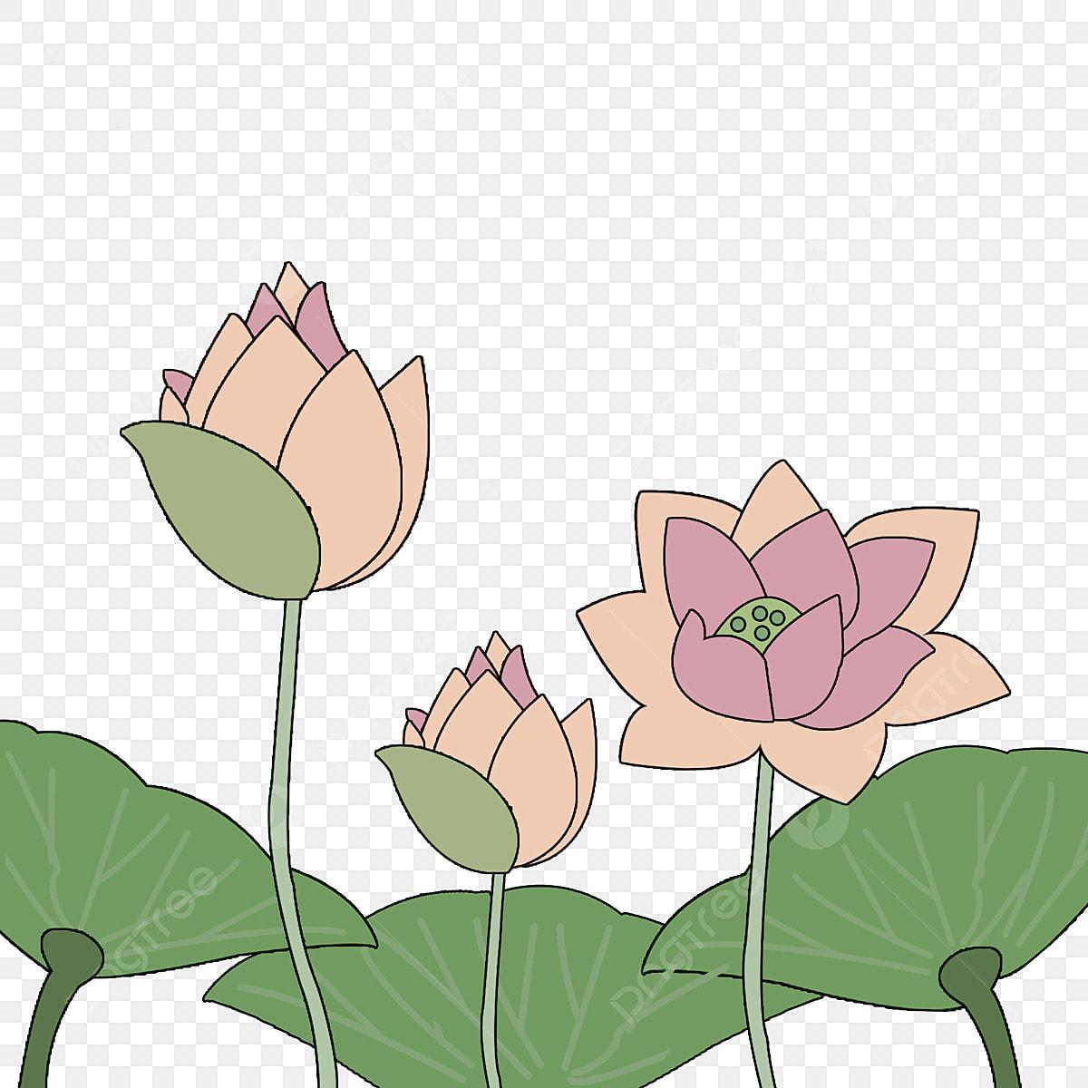 Matériel De Lotus Peint à La Main Dessin Animé Mignon Simple