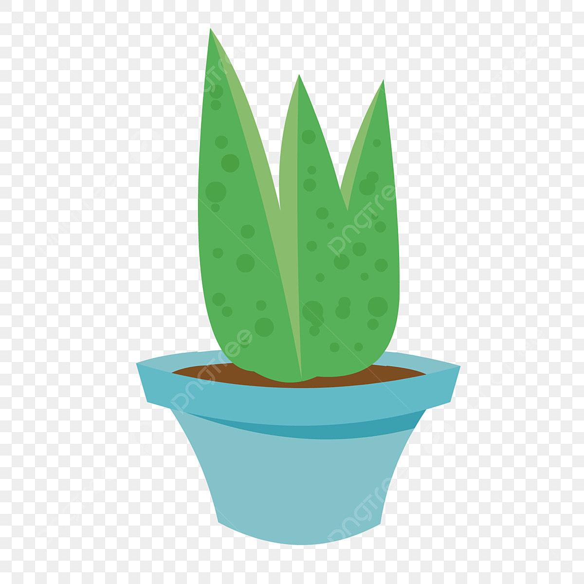 Gambar Tanaman Kaktus Kartun Belog Kite Kite Aje